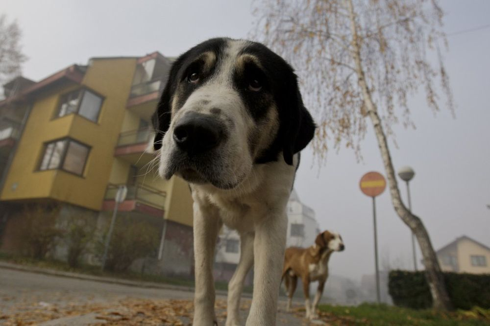 NOVOSAĐANI ODAHNULI: Niko neće biti kažnjen zbog hranjenja napuštenih pasa i mačaka