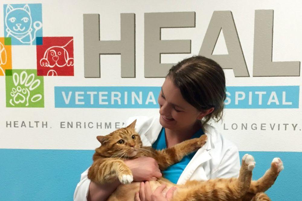 BACILI GA NA DIJETU: Mačak Mršavko je imao čak 18,6, pa smršao 9 kg!