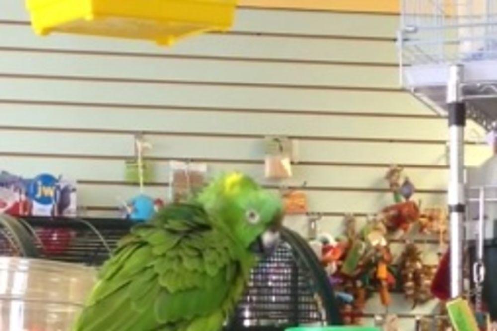 (VIDEO) NEMA BOLJEG OD OVOGA: Papagaj peva pesmu iz filma Lego