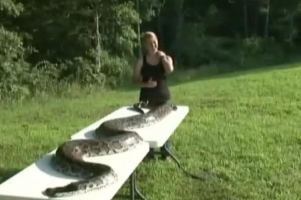 (VIDEO) BIO U DVORIŠTU: Ubili pitona dugog skoro 5 metara i teškog 72 kilograma