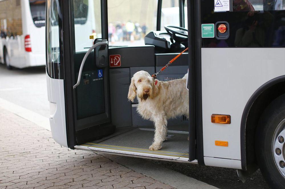 NOVOST U NS: Kuce i mace odsad mogu u gradski prevoz!