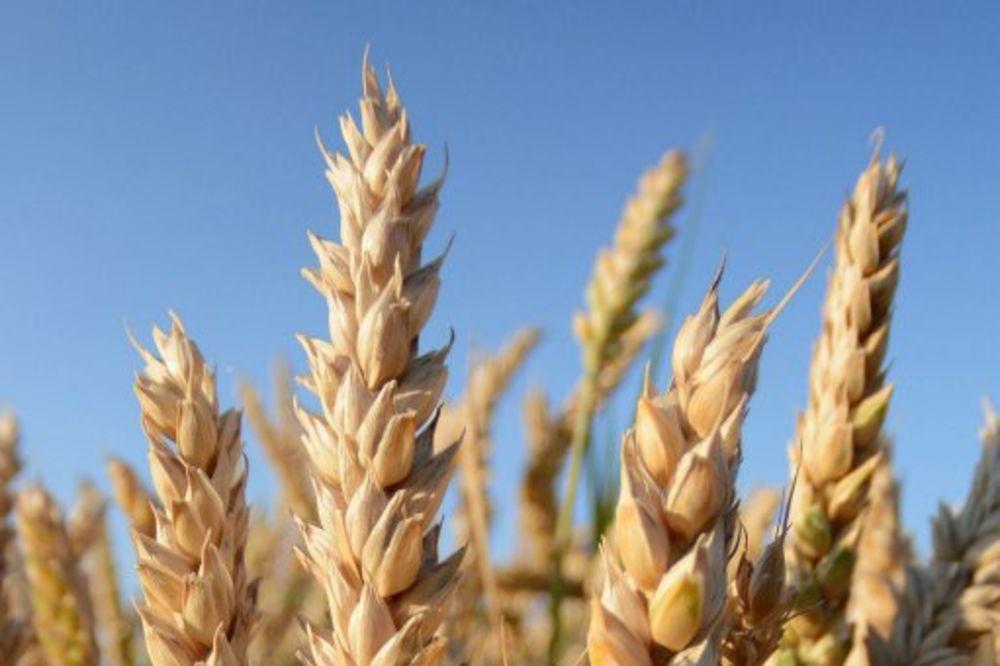 KRAGUJEVAC: Radnici Centra za strna žita blokirali nekoliko šaltera