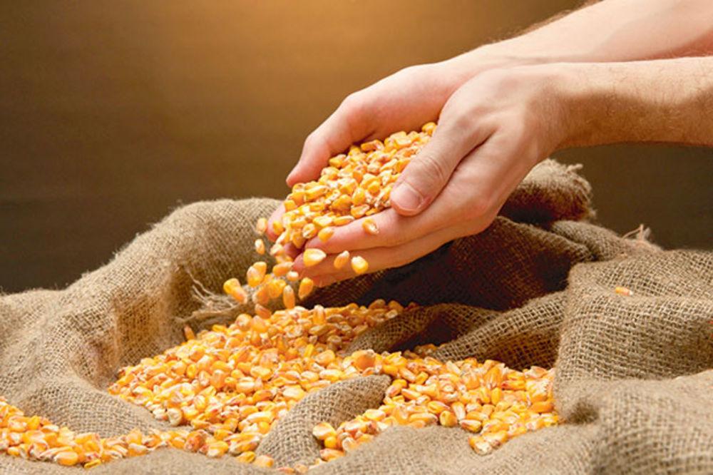 IZVOZ: Suficit agrara 690 miliona dolara