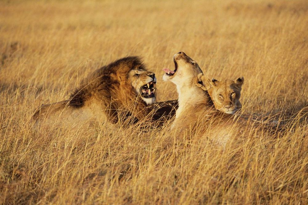 KVIZ: Koji duh životinje živi u tebi?