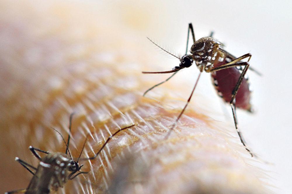 DR MIOMIR PELEMIŠ: Situacija sa virusom Zapadnog Nila pod kontrolom