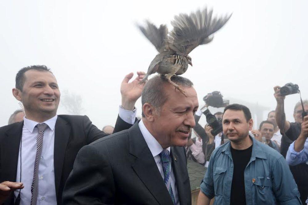 (VIDEO) KAO U HIČKOKOVOM FILMU: Tetreb napao turskog predsednika!