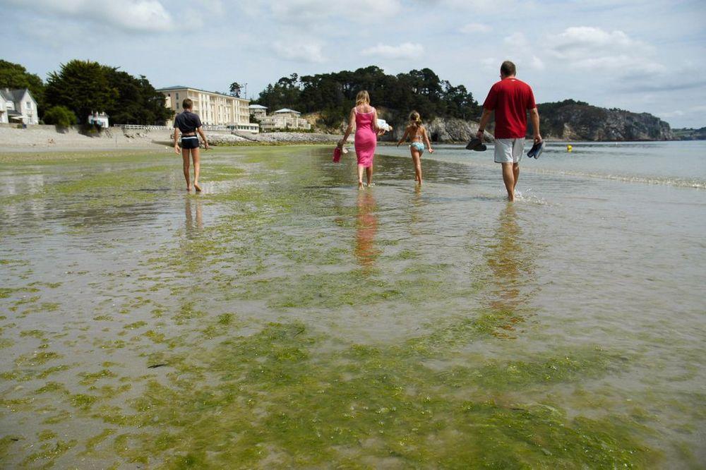 HRVATSKI NAUČNICI UPOZORAVAJU: Otrovne alge preplavile Jadran od Istre do Dubrovnika