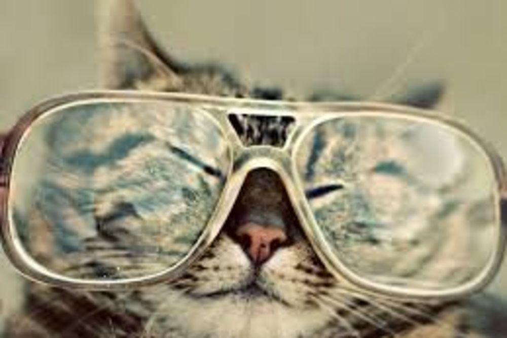 URNEBESNI RAZLOZI: Zašto je mačka bolja od psa!