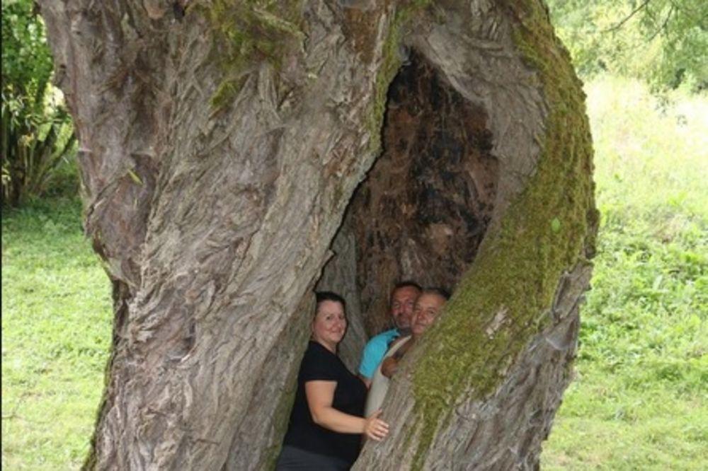 OVO DRVO IM JE SAČUVALO ŽIVOTE: Danas celo selo može da stane u staru vrbu!