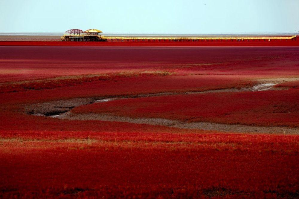 ČUDO PRIRODE: Crvena plaža svake jeseni ostavlja bez daha