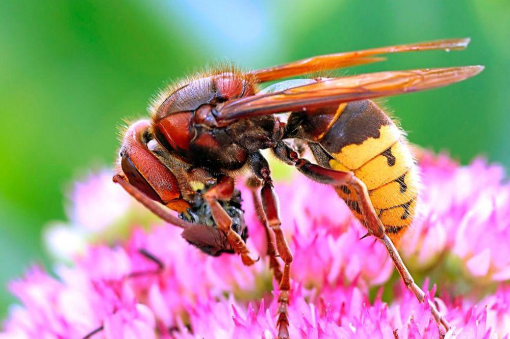 ON MOŽE DA VAS UBIJE, A VI NJEGA NE SMETE: Ako ubijete ovog insekta, možete zaglaviti robiju