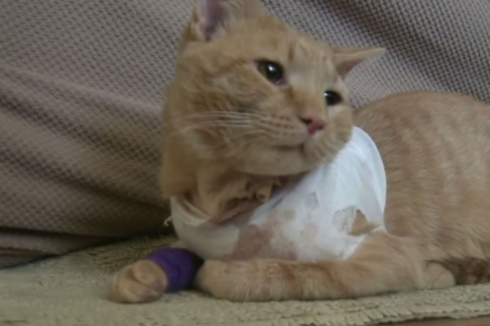STVARNO IMA 9 ŽIVOTA: Mačak uhvatio metak i spasao dečaka