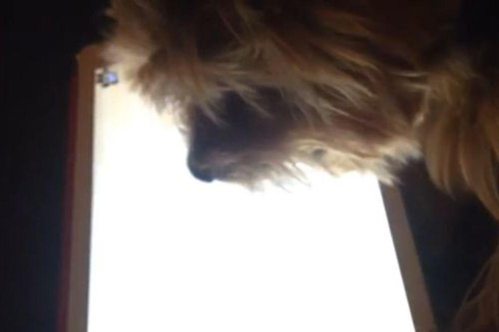 (VIDEO) NAPREDNA ŽIVOTINJA: Pogledajte kako terijer igra igricu na tabletu