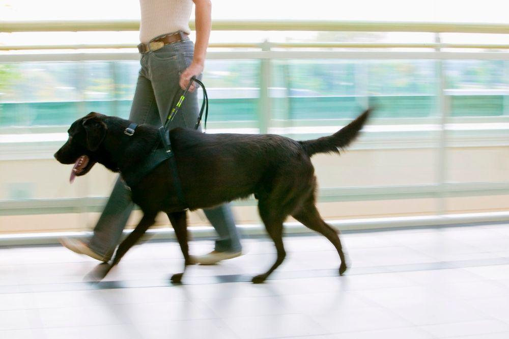 RIK: I psi vodiči smeju na biračko mesto
