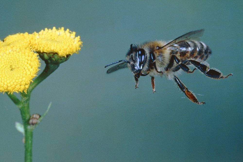 PČELARI, OPREZ: Zbog hemijskog voza zaštitite košnice u blizini pruga