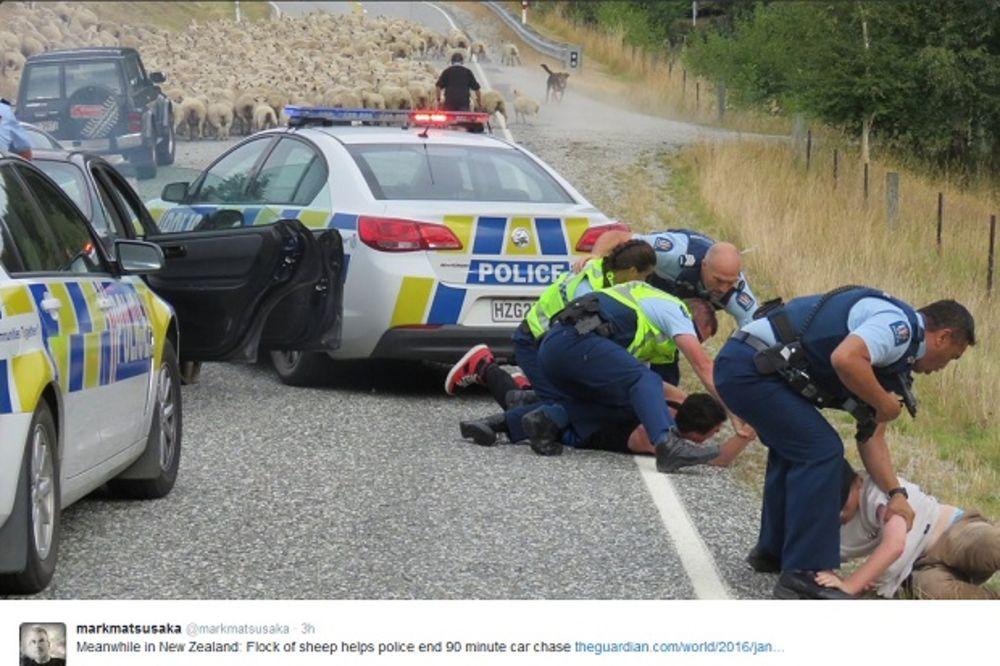 POLICIJA JURILA BEGUNCA SVE DOK NISU NAIŠLE ONE: Stado od 150 ovaca okončalo poteru