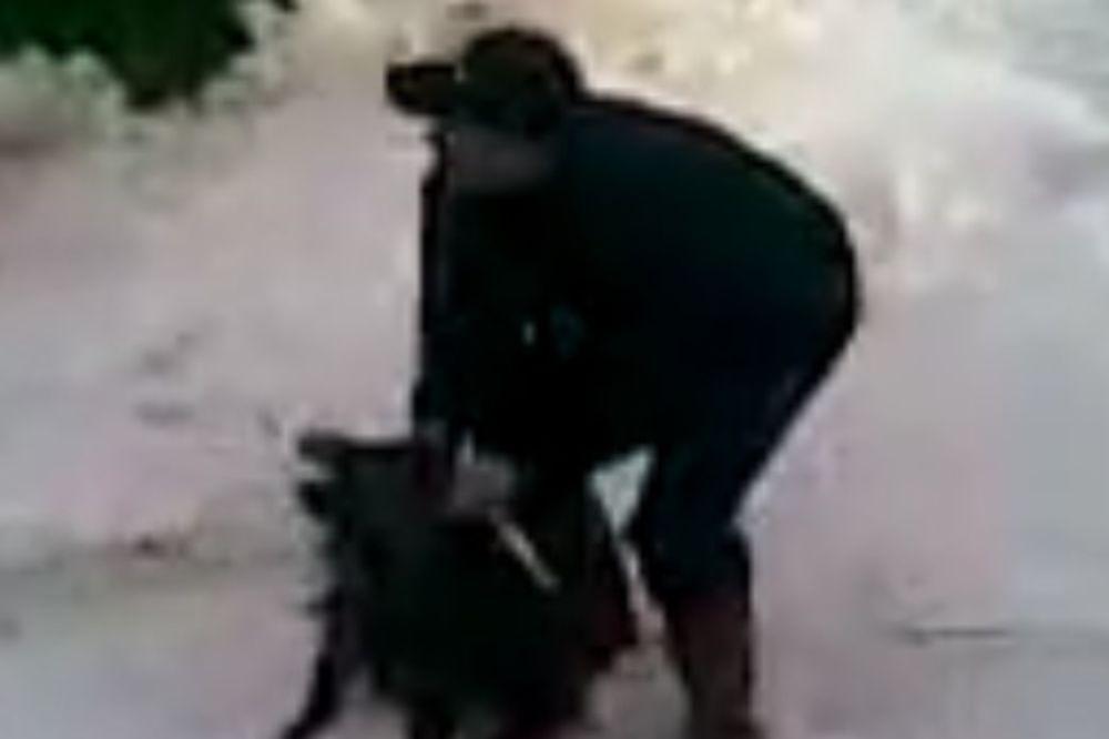 (UZNEMIRUJUĆI VIDEO) VI STE SRAMOTA ZA LOVCE: Zlostavljali ranjenu i nemoćnu divlju svinju