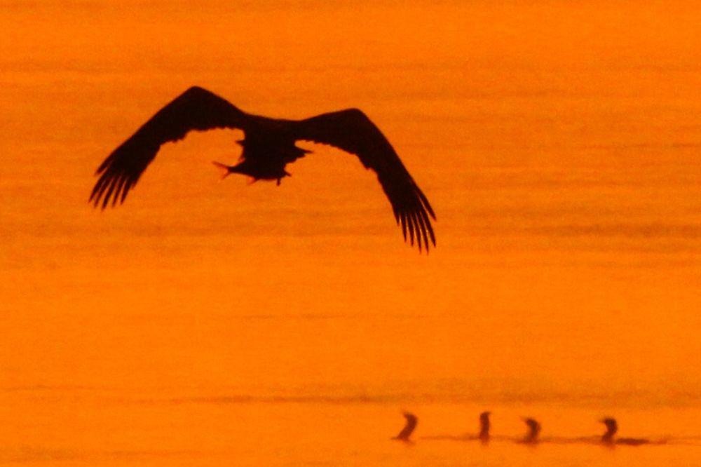 (FOTO) KAKVI PRIZORI: Ovako izgleda jutro na Dunavu!