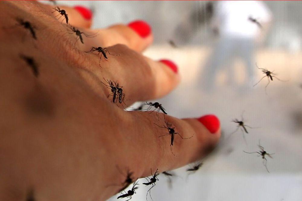 NA OPREZU: Virus zika stigao i u Hrvatsku