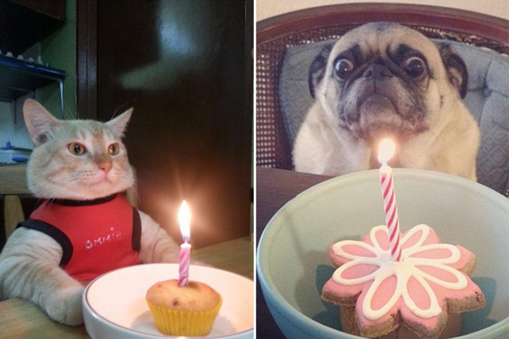 (VIDEO) NEODOLJIVI I NESTRPLJIVI: Evo koliko naši ljubimci vole svoje rođendane
