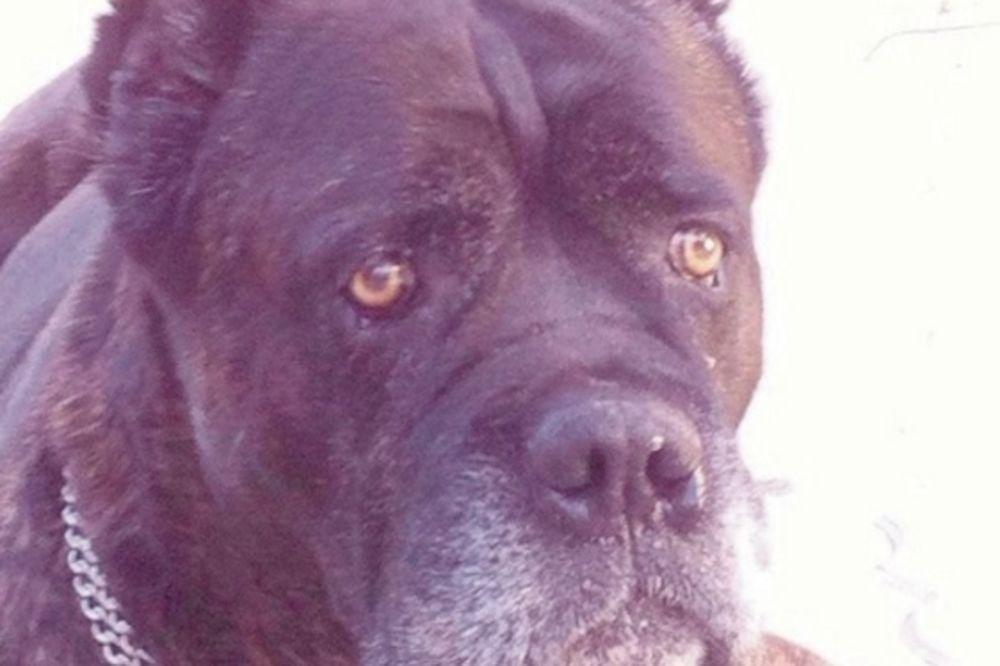 KAKVA SU OVO VREMENA DOŠLA: Kradu pse iz dvorišta kuća na crnogorskom primorju!