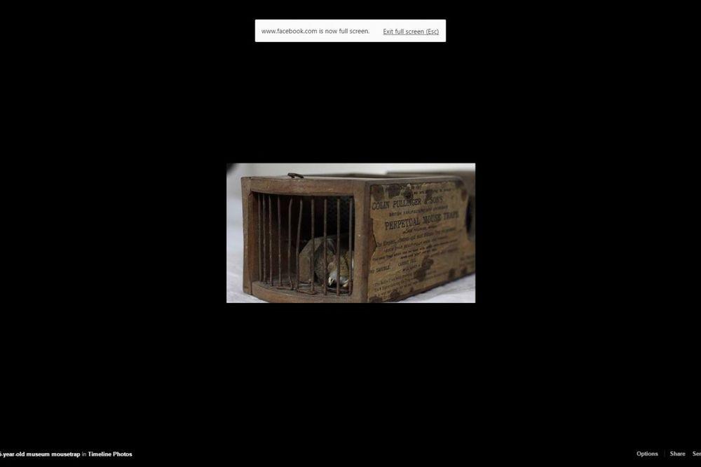 NAJNESREĆNIJI GLODAR NA SVETU: Zamka u muzeju postavljena pre 155 godina uhvatila miša