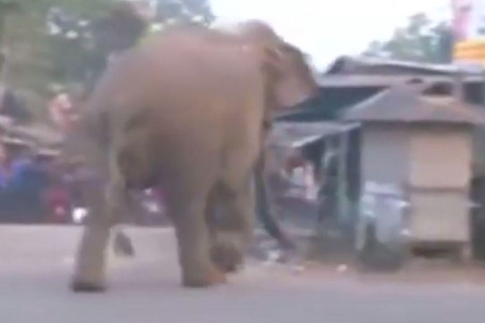 (VIDEO) NEPRAVEDNO OKLEVETANA: Slonica prošetala kroz selo, optužili je da je rušila kuće