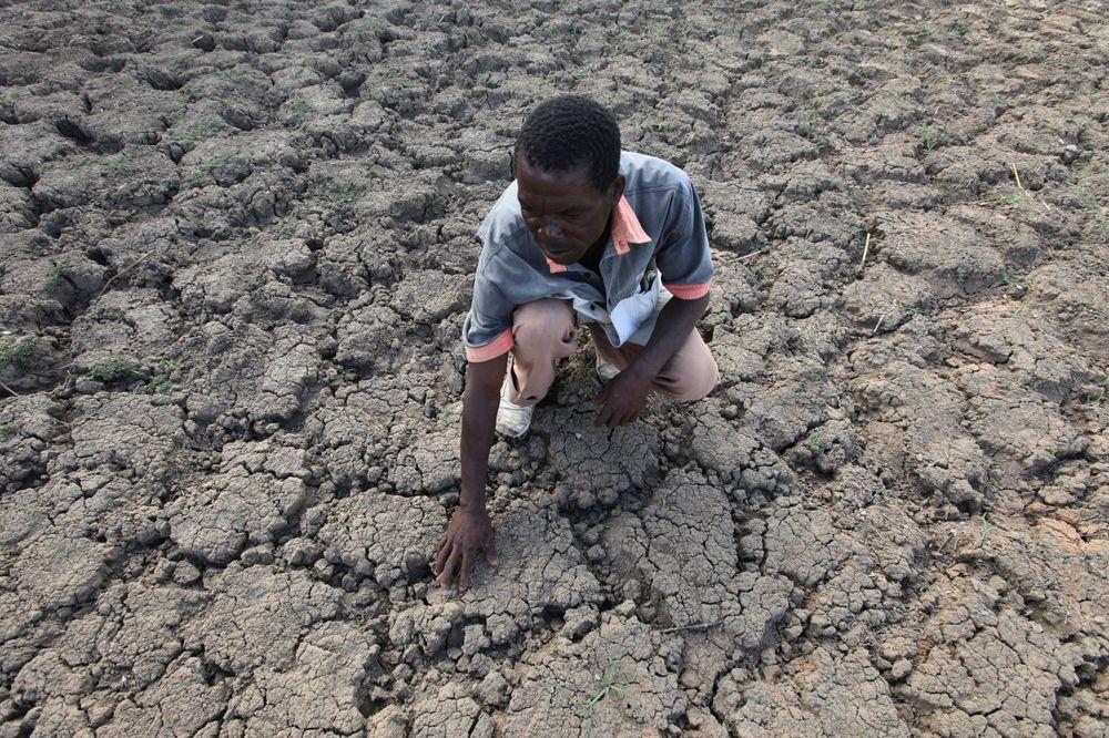 TRI MILIONA LJUDI GLADUJE: Oko 70 odsto useva u Zimbabveu propalo zbog klimatskih promena