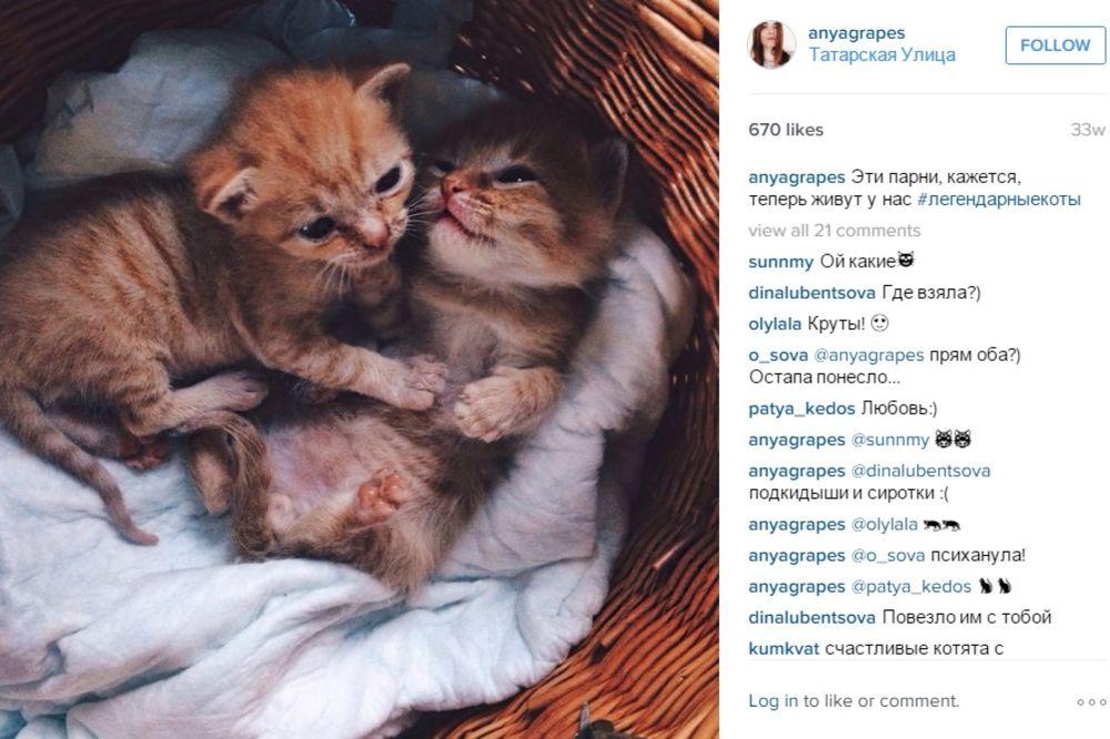 (FOTO) PRONAŠLA IH JE U BAŠTI: Ove narandžaste mace nerazdvojne su od prvog dana
