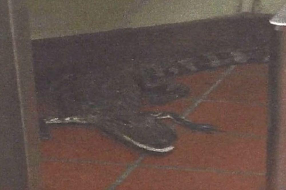 SAMO NA FLORIDI: Mladić bacio aligatora na restoran i samo se odvezao