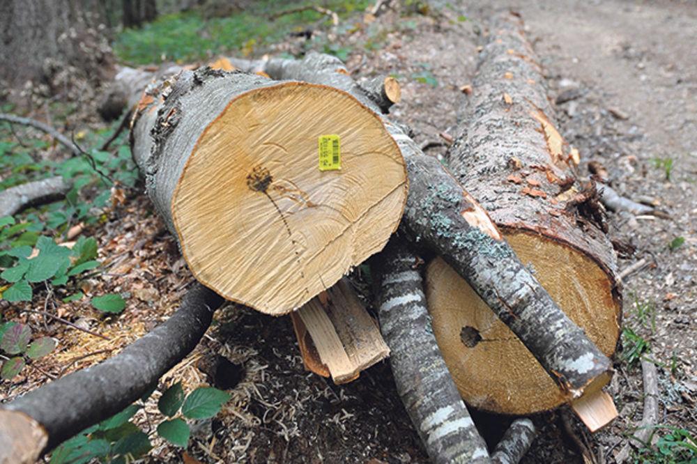 Srbijašume, šuma, drvo, foto Dado Đilas