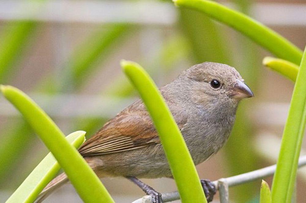 REŠI KVIZ I SAZNAJ: Koja ptica predstavlja tvoj stil?