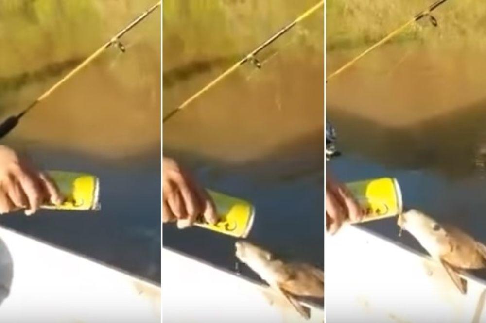 (VIDEO) NEĆETE VEROVATI SVOJIM OČIMA: Žedna riba naslonila se na brod i popila gutljaj piva