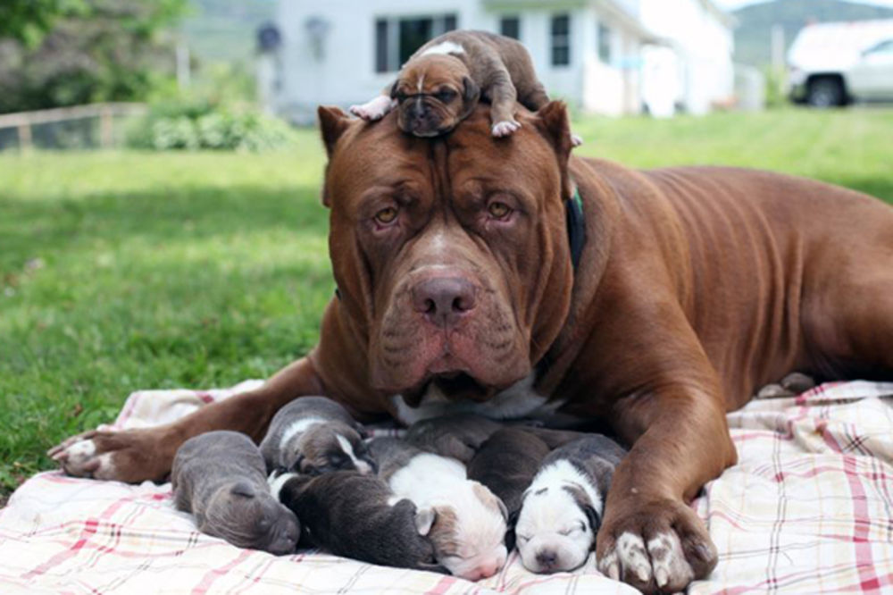 Foto: Profimedia, Ilustracija: Psi