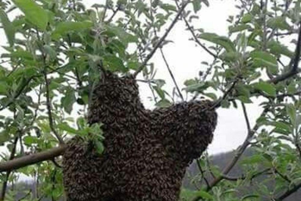 ČUDO NA VASKRS U PLJEVLJIMA: Roj pčela napravio krst!