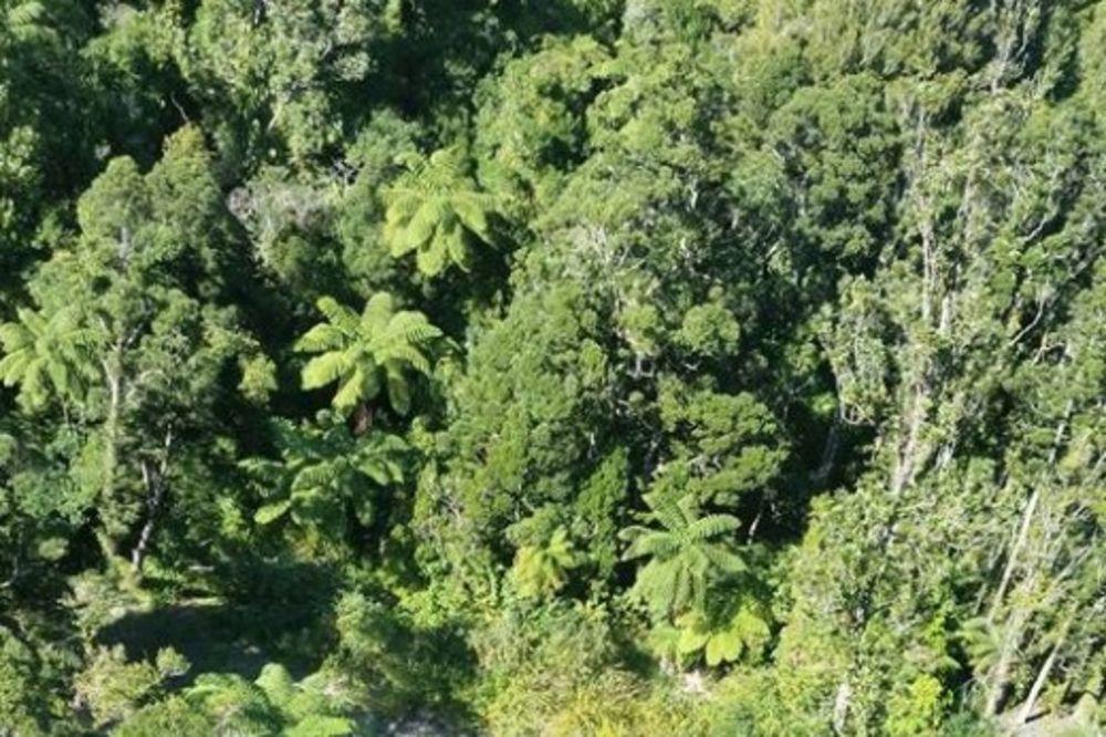 LUTALE 4 NOĆI U DIVLJINI: Zahvaljujući ovoj poruci helikopteri su spazili izgubljenu majku i ćerku