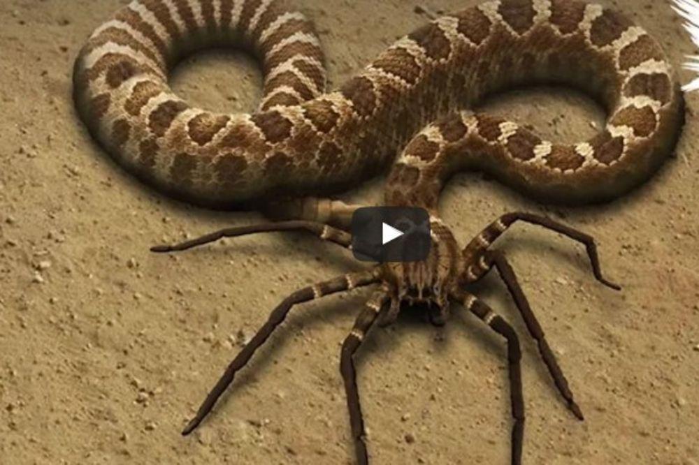 LUDAČKI HIBRIDI ŽIVOTINJA ZA KOJE ĆETE MISLITI DA SU FOTOŠOPIRANI: Ne, ova stvorenja zaista postoje!
