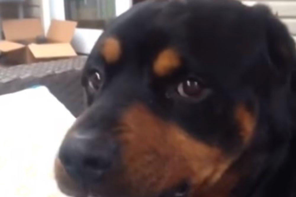 (VIDEO) PRESLATKO LOŠ GLUMAC: Do suza će vas nasmejati njegova opasna grimasa!