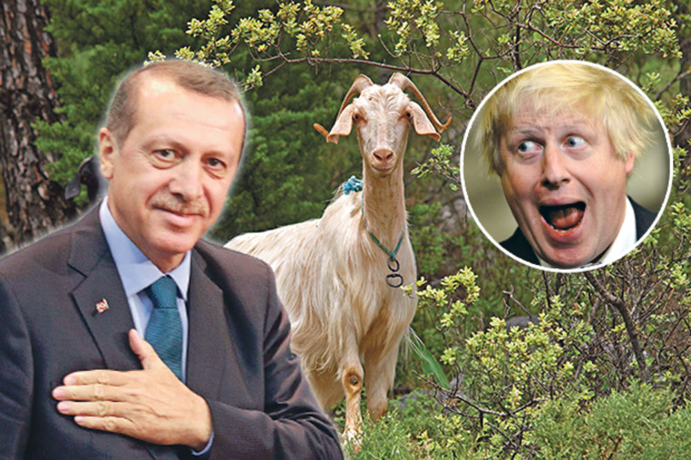 BRITANAC STIHOKLEPAC Boris Džonson: Erdogan voli seks sa kozama!