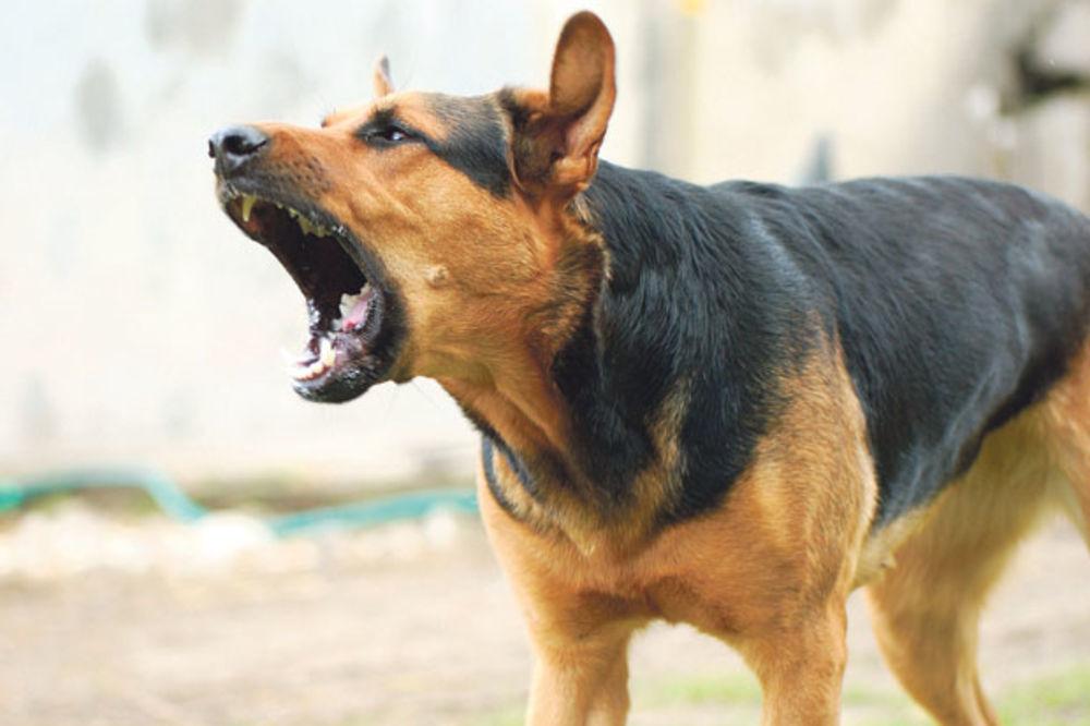 UŽAS U NEGOTINU: Pas lutalica napao i izujedao devojčicu (7)