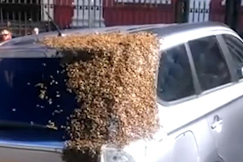 (VIDEO) ROJ ZALJUBLJENIH PČELA JOJ DVAPUT NAPAO AUTOMOBIL: Pratili ga miljama da bi spasli maticu