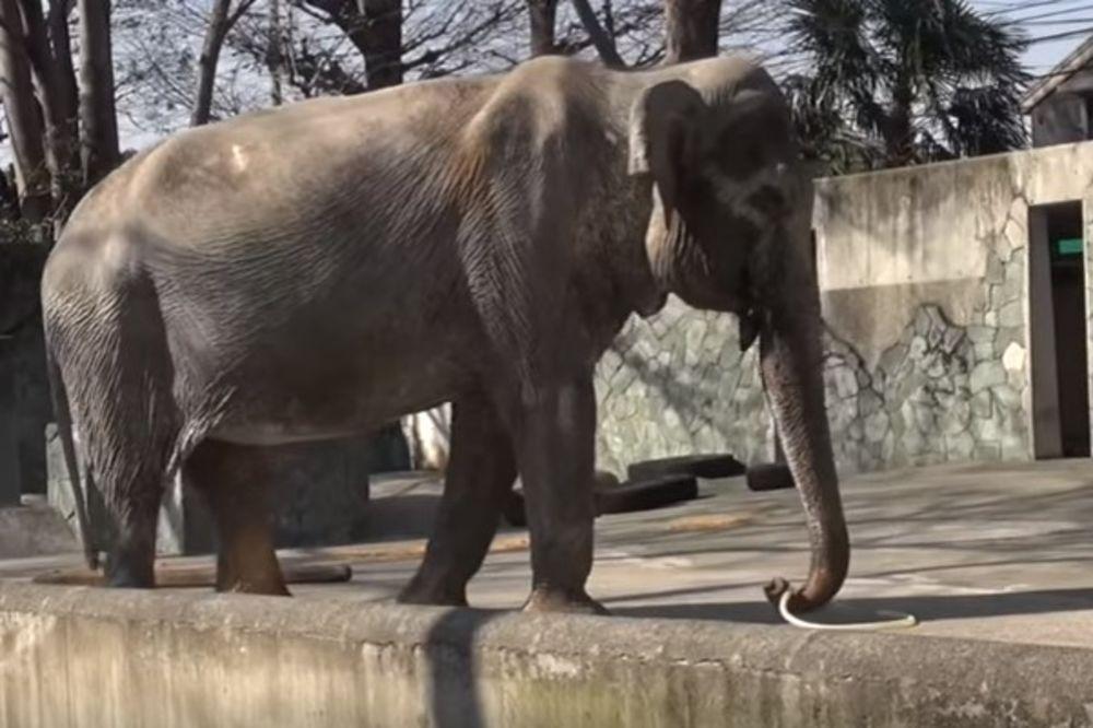 (VIDEO) ŽIVOT PROVELA U SKUČENOM BETONSKOM PROSTORU: Uginula Hanako, najstarija slonica u Japanu