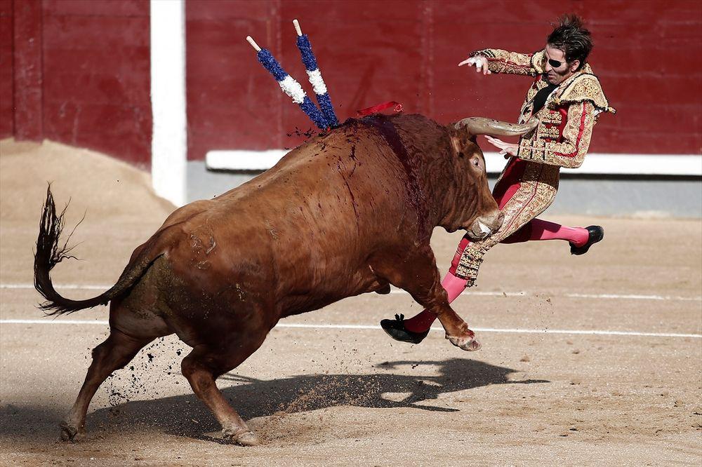 (UZNEMIRUJUĆE) KRVAVA KORIDA: Jednookog toreadora bik oborio i proburazio, ali on se nije predao
