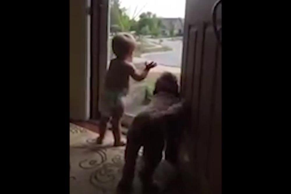 (VIDEO) NEĆETE SKINUTI OSMEH SA LICA: Ovoliku sreću bebe i psa niste videli!