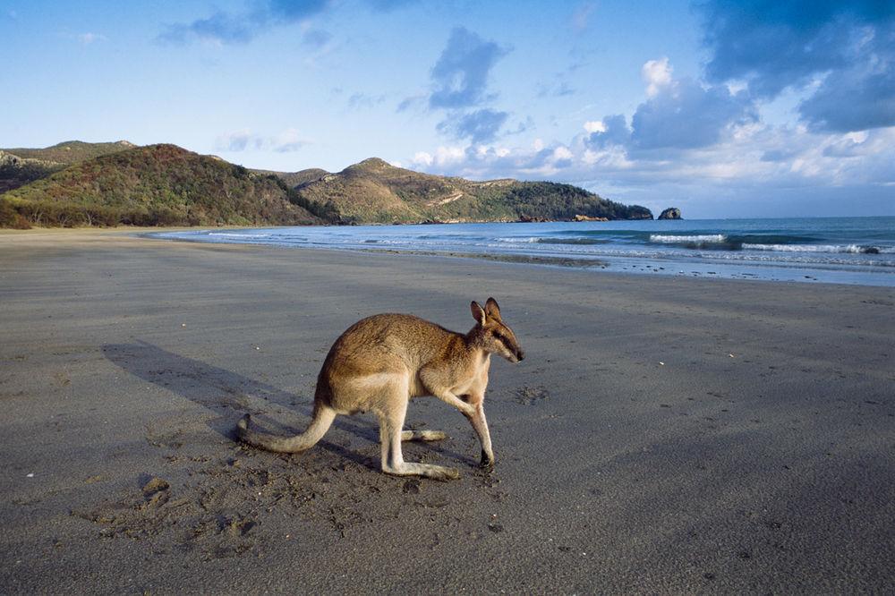POSLUŽILI JOJ KO ER BEG: Vozila je bicikl a onda je kengur skočio na nju i probušio joj silikone