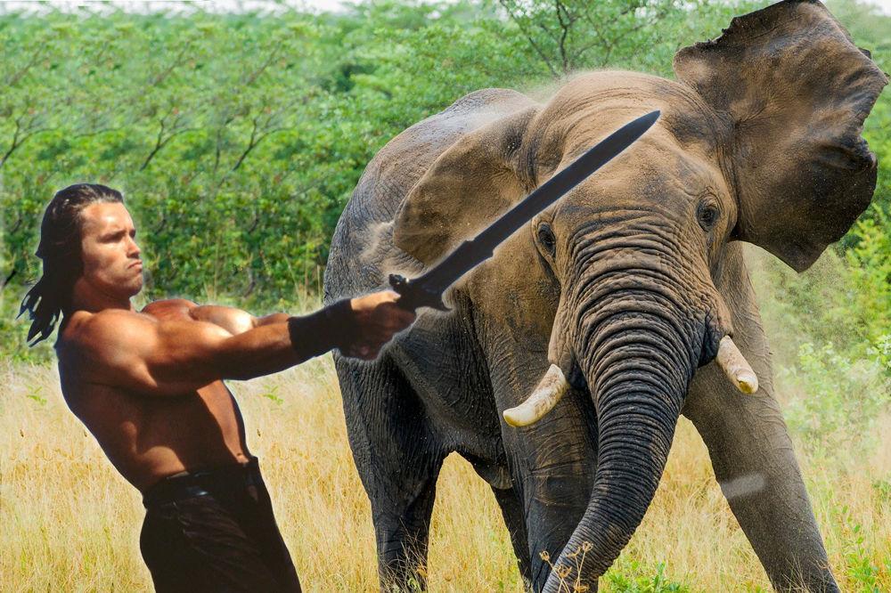Секс уафриканских слонов видио
