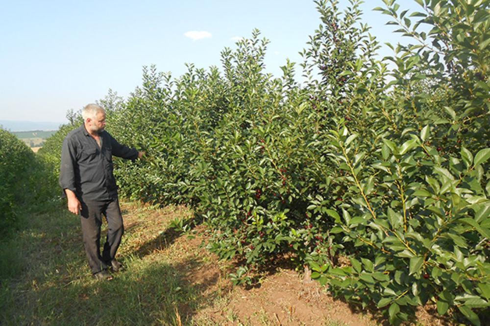 NEZAPAMĆENA KRAĐA U BLACU: Lopovi iz voćnjaka ukrali kompletan sistem za navodnjavanje