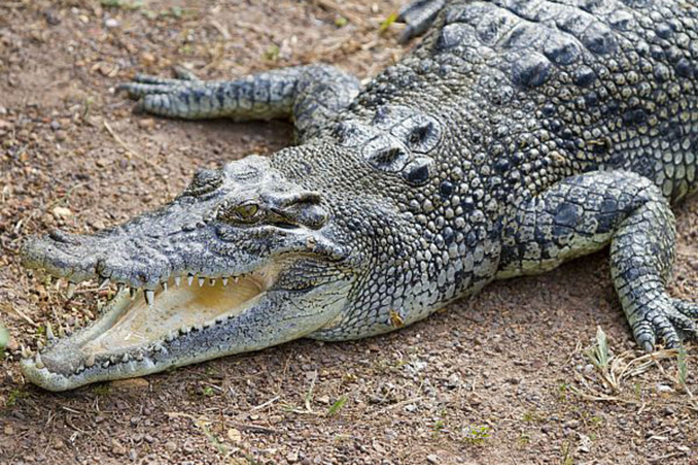 NEMARAN OTAC: Pustio decu da se igraju u vodi prepunoj krokodila