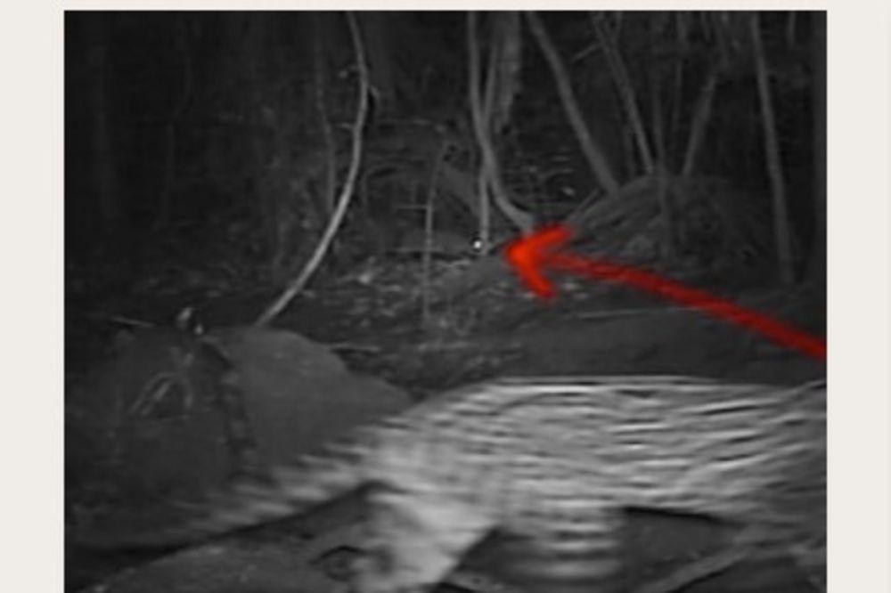 SKRIVENA KAMERA POSTAVLJENA DUBOKO U AMAZONU: Snimljena najneverovatnija bića ikad viđena!