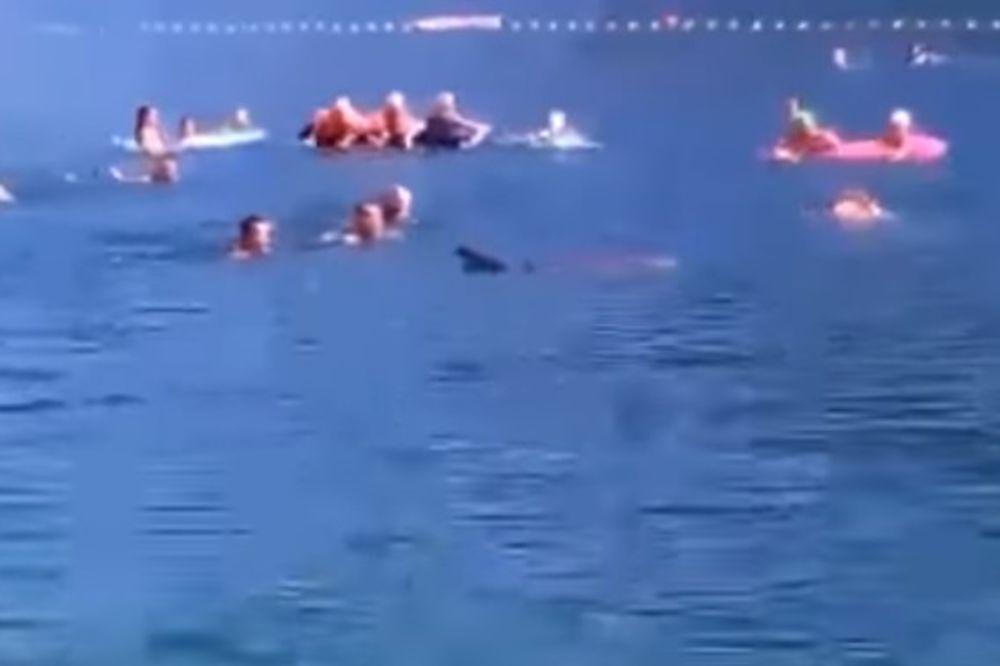 (VIDEO) OMILJENI GOST OPET U NEUMU: Druželjubivi delfin se kupao sa plivačima